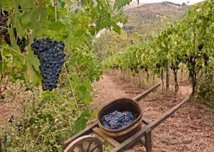 "INTERPOLATING JESUS' PARABLE of the ""WORKERS in the VINEYARD"""